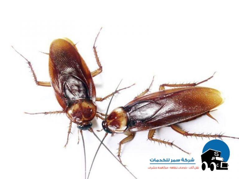 شركة لمكافحة الحشرات %D8%A7%D9%81%D8%B6%D