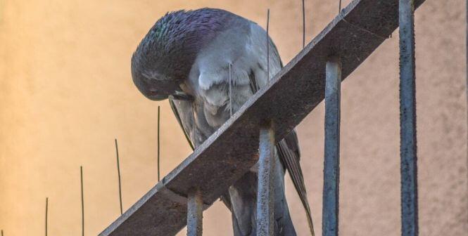 طارد الطيور و شبك طارد الحمام