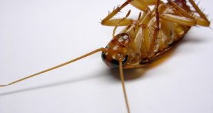 القضاء على الصراصير