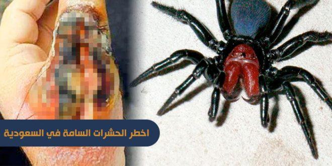 اخطر الحشرات السامة في السعوديه