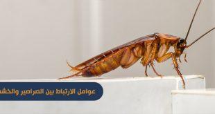 عوامل الارتباط بين الصراصير والخشب