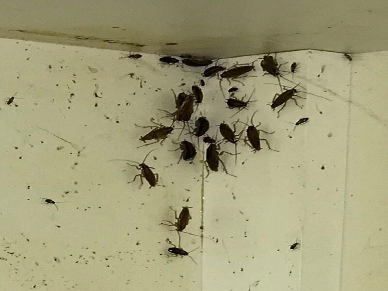 كيفية التخلص من الصراصير الصغيرة في المطبخ
